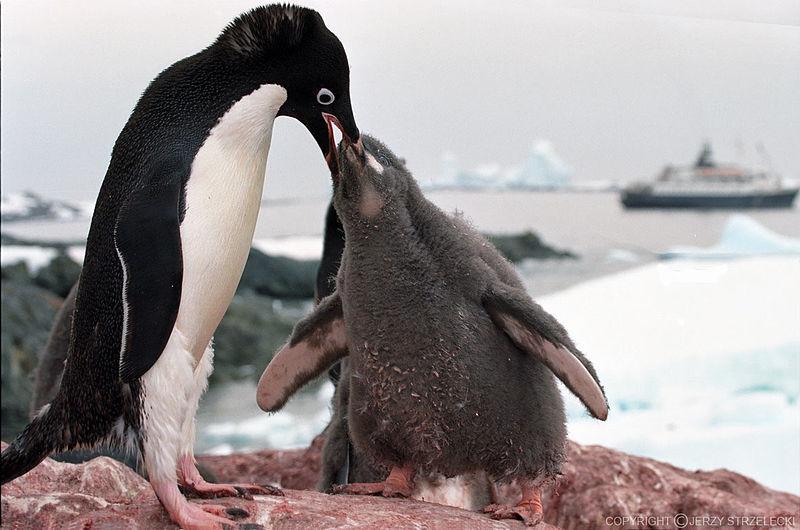 penguins-climate-change