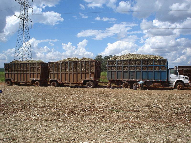Sugarcane mechanical harvest