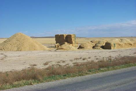 biomass-sustainability