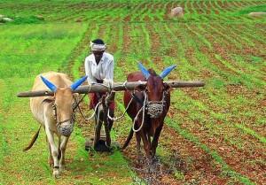 farming india food security green revolution photo