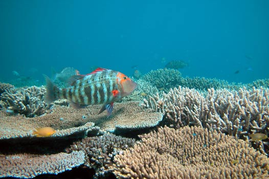 what is ocean acidification