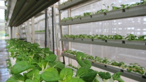 crop-farming-singapore