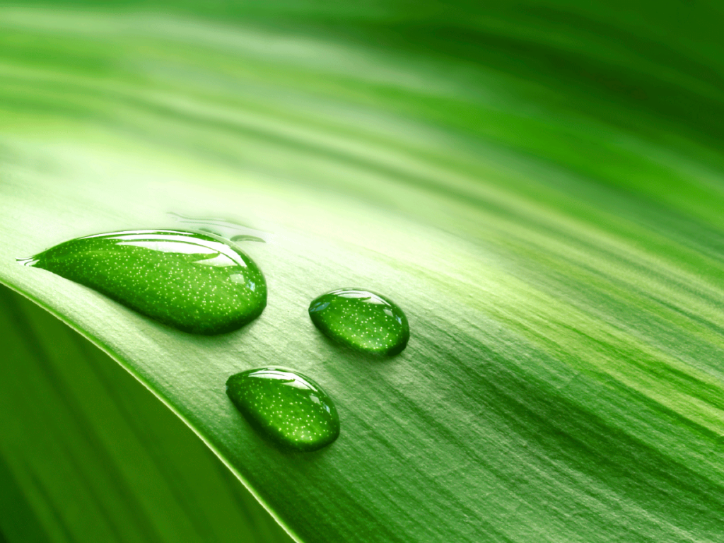go-green-in-business