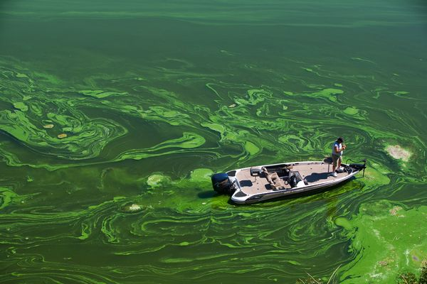 eutrophication algal bloom