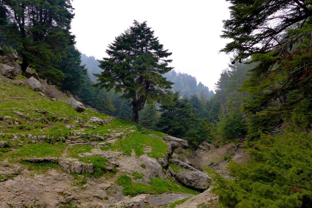 forests lebanon