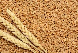 storage grains