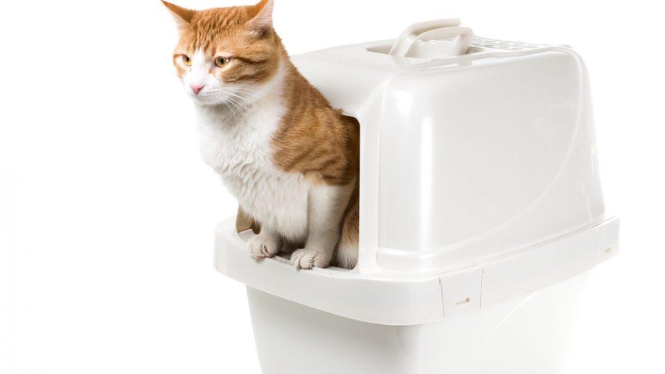 automatic-litter-box