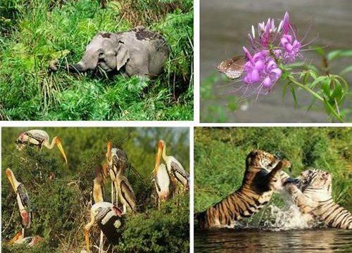 flora and fauna bihar