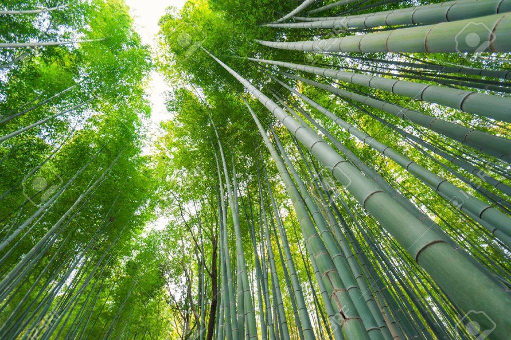 bamboo-packaging