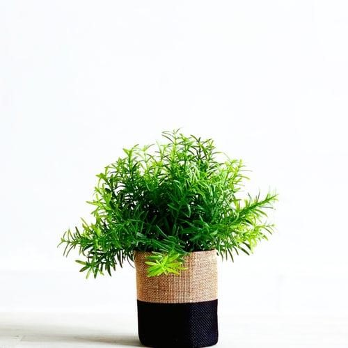 indoor plants for home