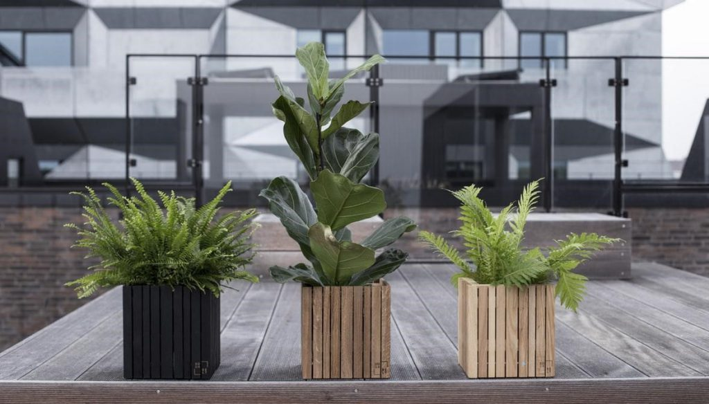 stress-reducing-indoor-plant