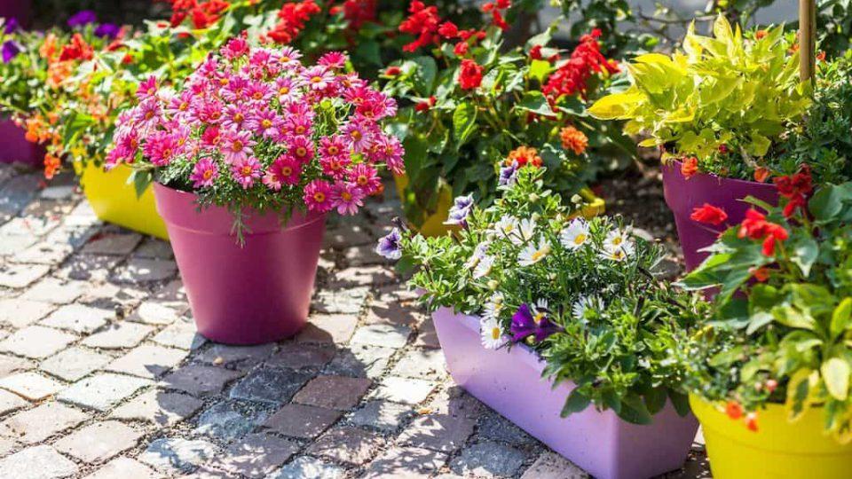 gardening-guide
