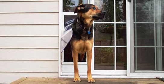 automatic dog entrance
