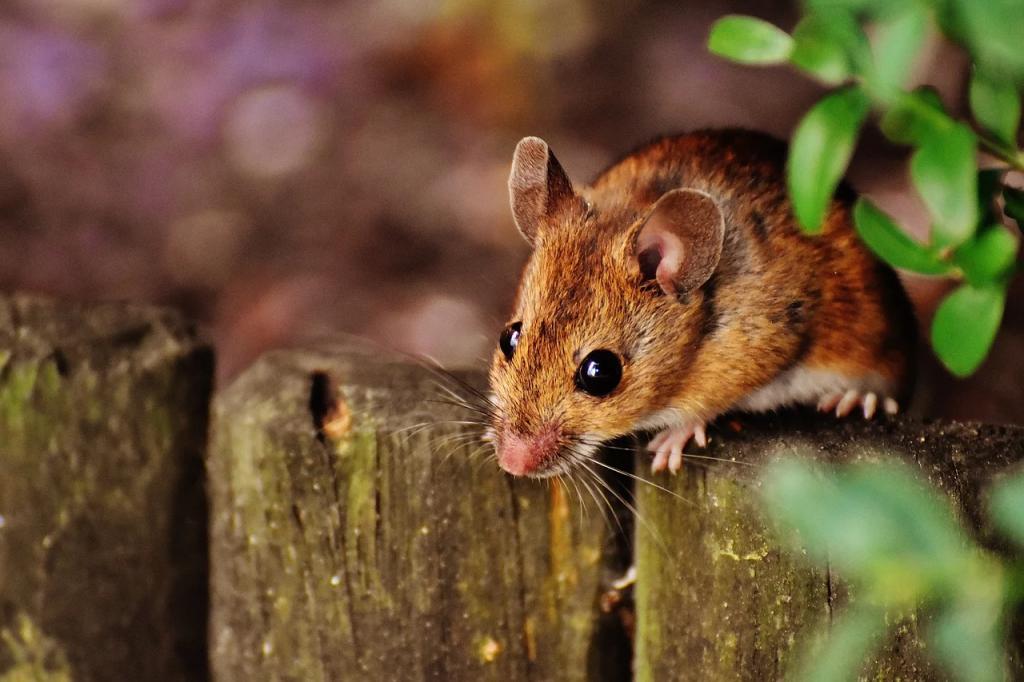 mice backyard