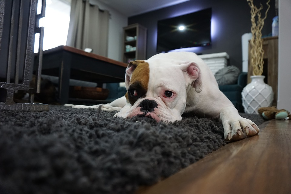 Pet Friendly Carpet Cleaning