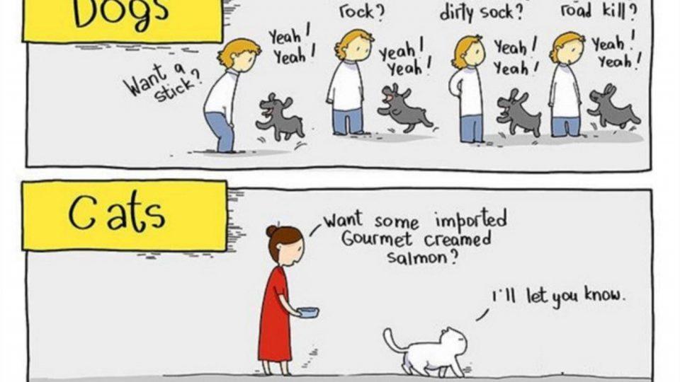 CBD-for-Pets
