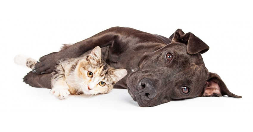 Pets-and-CBD