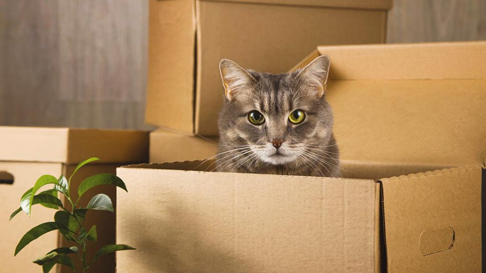 pets-home-relocation-tips
