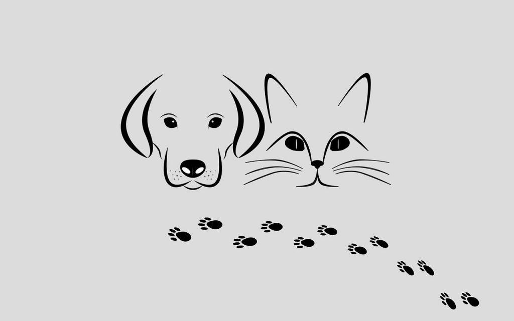 pets-seizures