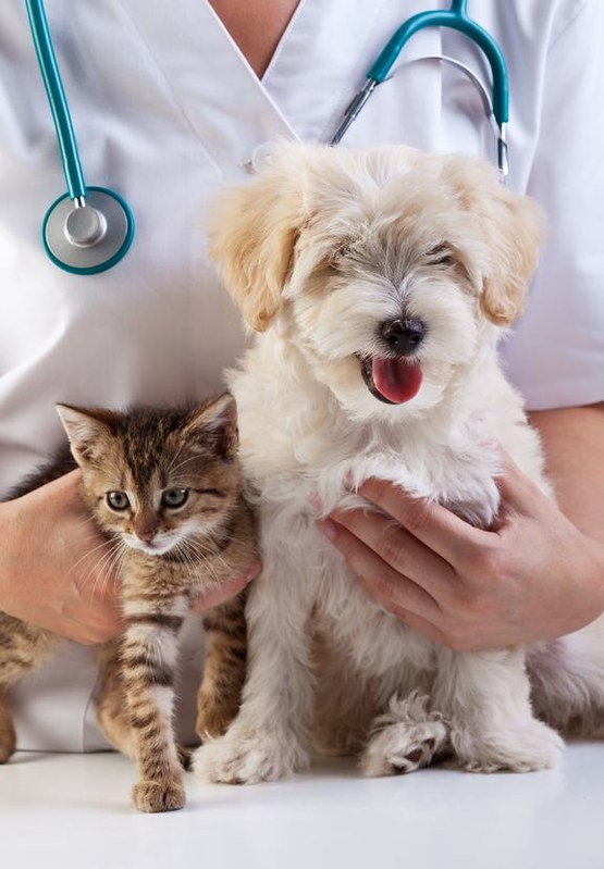 Dogs-and-Cats-Seizures