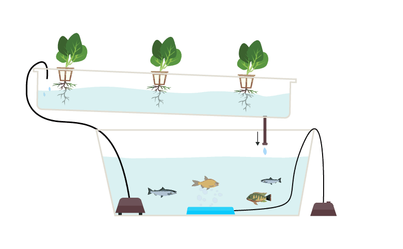 aquaponics-mechanism