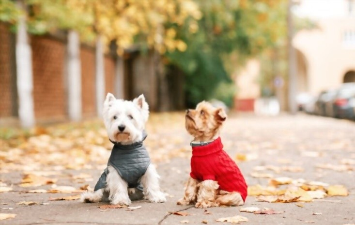 clothes-for-dogs