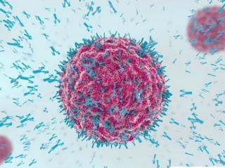 uses of antibody screening
