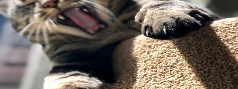 how to trim cat's nails