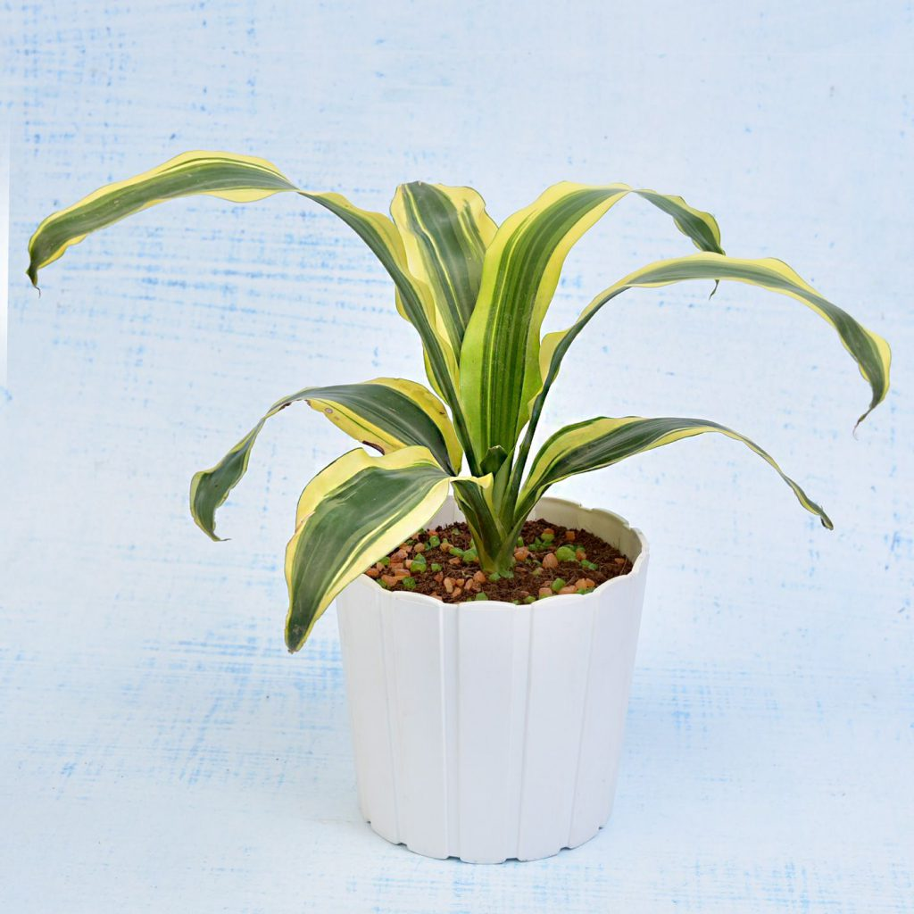 Best Indoor Plant Options For Your Home Office