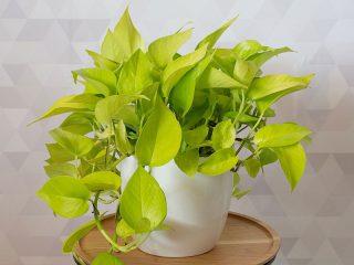 Best Indoor Plant Options